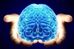 Brain-Transplant